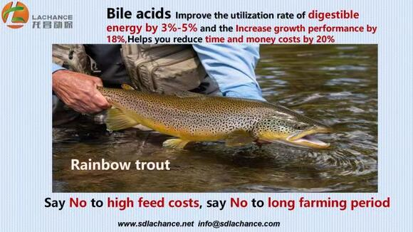 a innovative product of improve the salmon weight by 20% - Casos clínicos