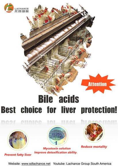 Los ácidos biliares son la mejor solución para el hígado graso. - Casos clínicos