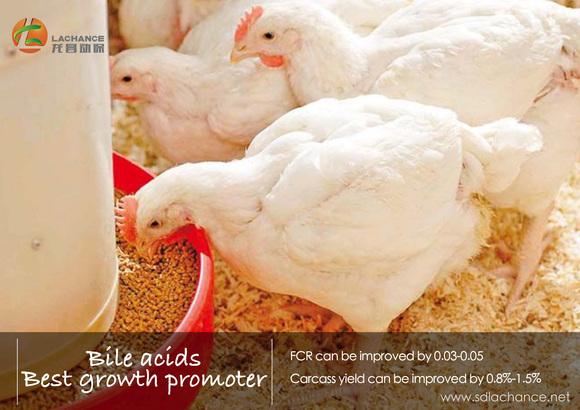 ¿Quiere mejorar el rendimiento de crecimiento de los pollos de engorde? - Casos clínicos