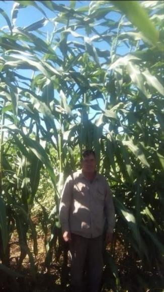 Sorgo gigante 002E..Agricomseeds bolivia - Varias