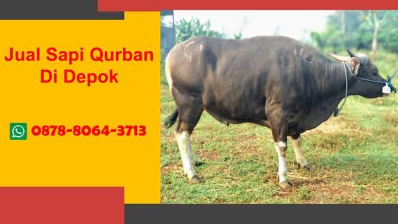 WA 0878-8064-3713  Harga Sapi Di Wilayah Cilodong Depok
