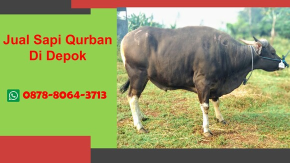 WA 0878-8064-3713  Sapi Qurban Di Seputar Cinere Depok