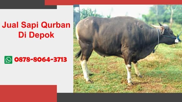WA 0878-8064-3713  Kurban Sapi  Di Pancoran Mas Depok
