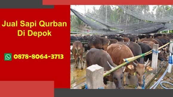 WA 0878-8064-3713, Pedagang Sapi Qurban 2021 Di Kota Depok - Personal