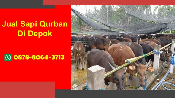 WA 0878-8064-3713, Pedagang Sapi Qurban 2021 Di Dekat Depok - Personal