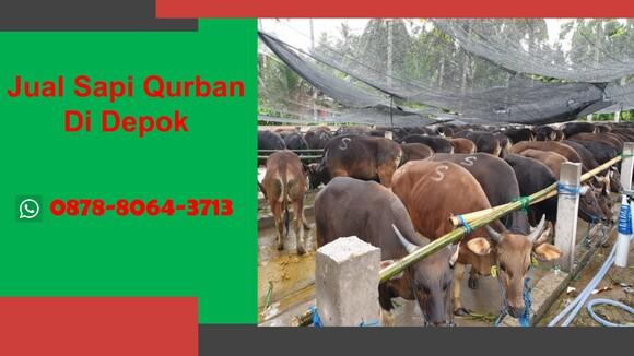 WA 0878-8064-3713, Pedagang Sapi Qurban 2021 Di Kawasan  Depok - Personal