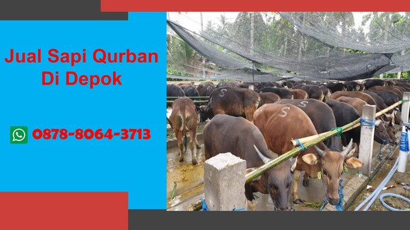 WA 0878-8064-3713, Pedagang Sapi Qurban 2021 Di Lingkungan Depok - Personal