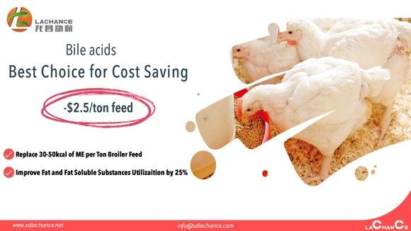 Los ácidos biliares ayudan a reducir el costo del alimento $ 2.5 por tonelada de alimento - Casos clínicos
