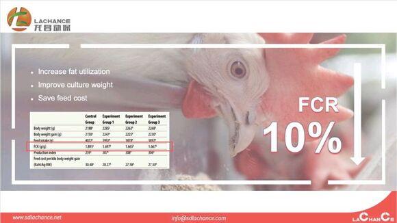 Innovador producto para mejorar FCR de pollos de engorde - Eventos