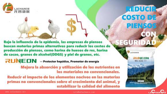 Innovador producto para reducir costo de alimento para pollos de engorde - Eventos