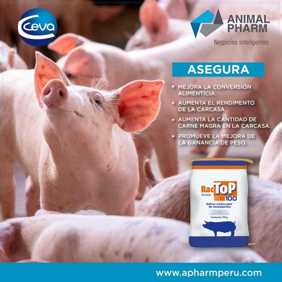 RACTOP 10% (RACTOPAMINA) - CEVA - Lanzamientos Animal Pharm