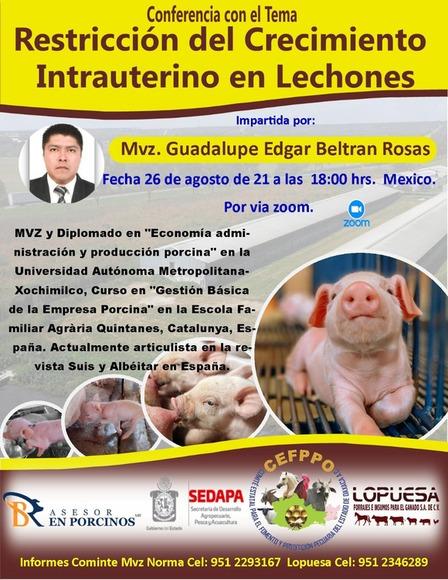 Restricción del Crecimiento intrauterino - Asesor en Porcino