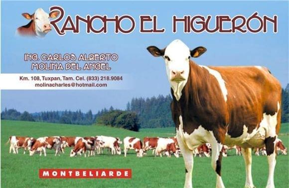 MONTBELIARDE - RANCHO HIGUERON