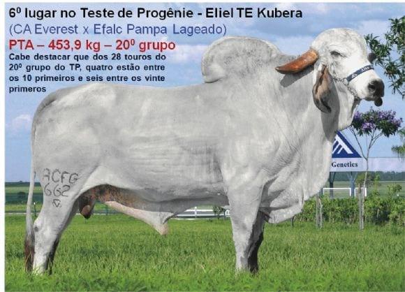 Teste de Progênie - Eliel TE Kubera - Gir Leiteiro