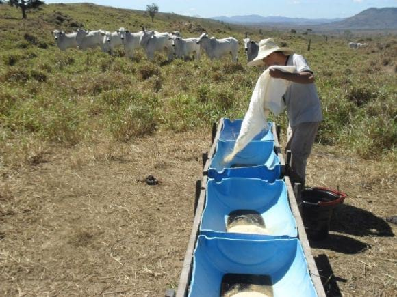 Suplementação de bovinos Nelore a pasto - Suplementação de bovinos Nelore a pasto