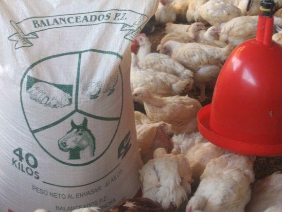 Alimento pollos ref 17118 for Alimentos balanceados para truchas