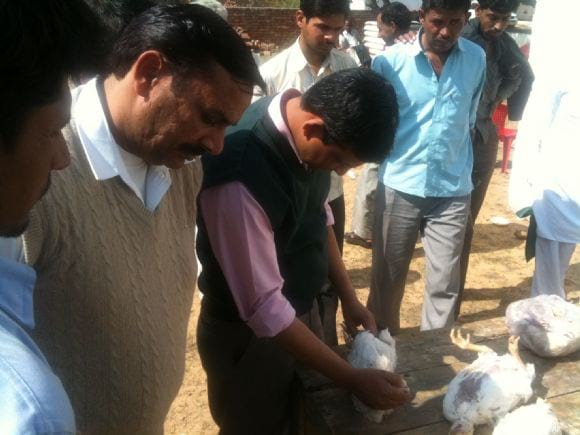 Service to the farmer - Poultry disease diagnosis