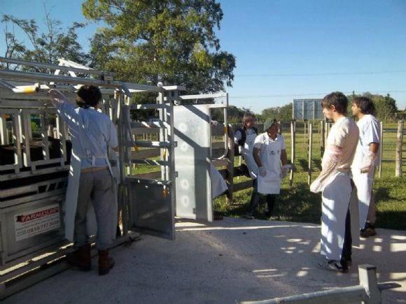 Inseminación Artificial en bovinos - curso de IA en Bovinos