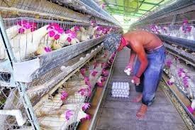 Errores más frecuentes en empresas porcinas y avícolas - Varias
