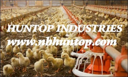 Poultry farming, Poultry equipment, Poultry farm equipment - Garden tool Agriculture Watering irrigation equipments