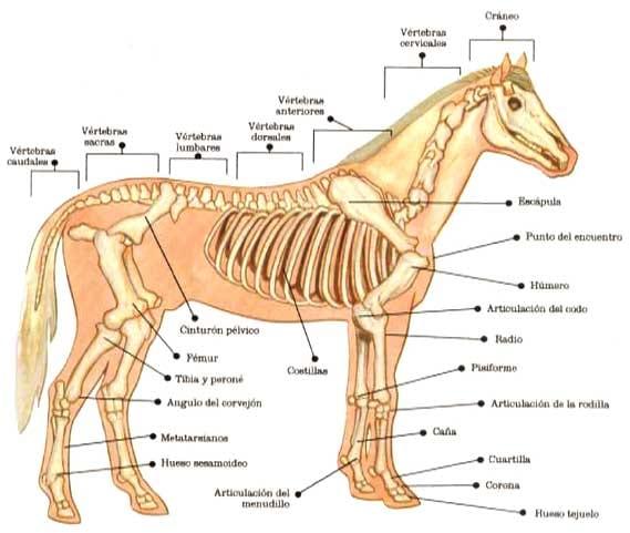 La nutricion y alimentacion del caballo - Engormix