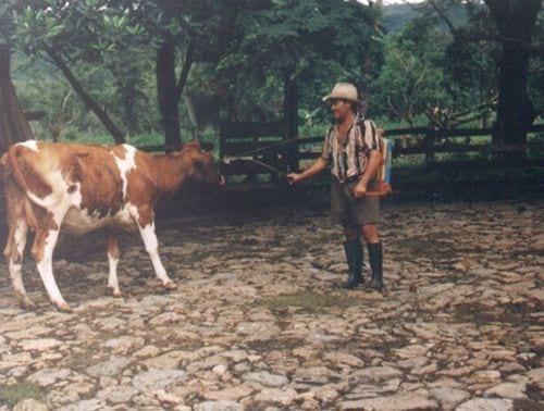 Baño Quimico Pequeno:Forma tradicional como los pequeños productores ganaderos de Colombia