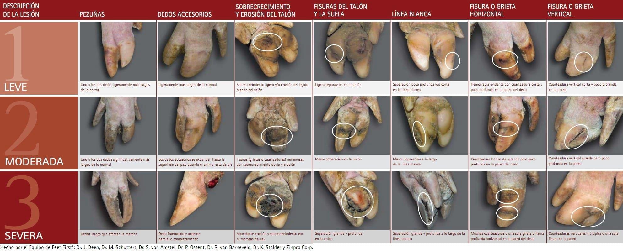 Pezuñas de cerdos - Guía para la clasificación de lesiones - Engormix