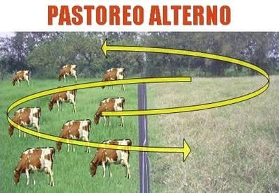 Tipos de pasto para el ganado bovino free full version - Tipos de cesped ...