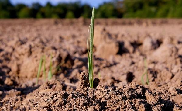 Argentina - Biodiversidad del suelo: base para la producción sostenible - Image 1