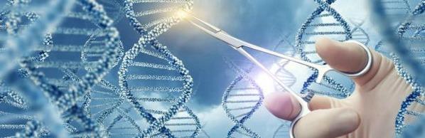 Evaluación de la edición del genoma en plantas, Informe EFSA - Image 1