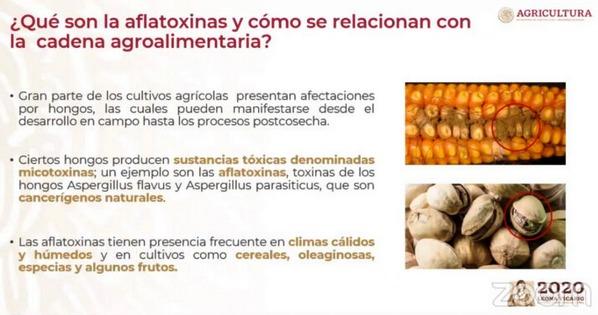 México - Sader promueve plan sustentable para cultivo de maíz blanco - Image 2