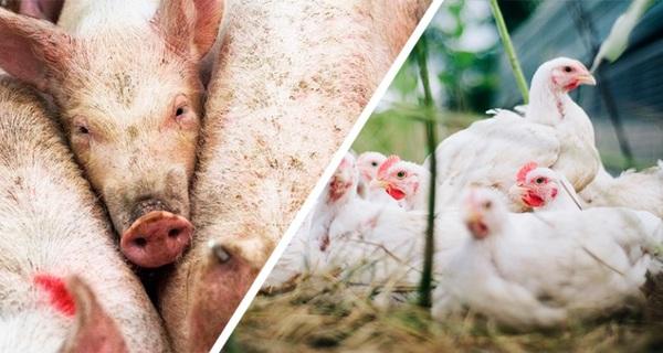 El papel fundamental de la digestibilidad en producción animal - Image 1