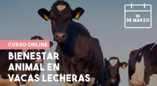 Curso Bienestar animal en vacas lecheras - Image 1