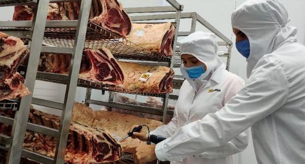 Mafrica y el IRTA trabajan conjuntamente para optimizar el sistema de maduración de la carne de bovino - Image 1