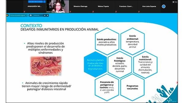 El papel de alimentación en la inmunidad y en la salud intestinal - Image 2