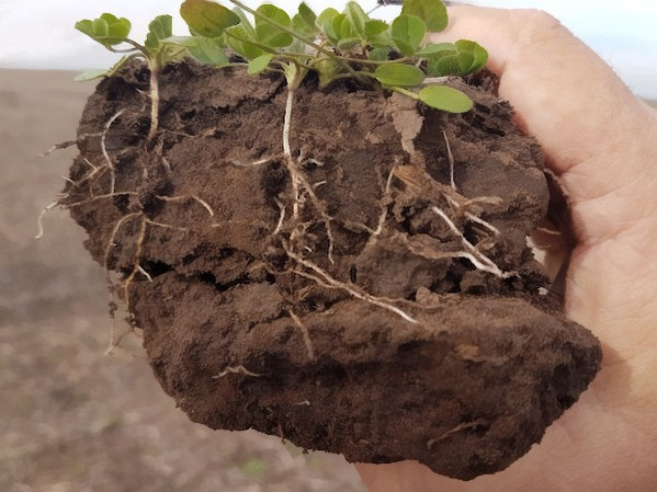 Argentina - Esclarecen el rol de las raíces en la salud de suelos y ecosistemas - Image 3