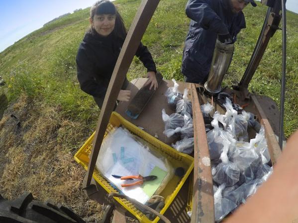 Argentina - Esclarecen el rol de las raíces en la salud de suelos y ecosistemas - Image 2
