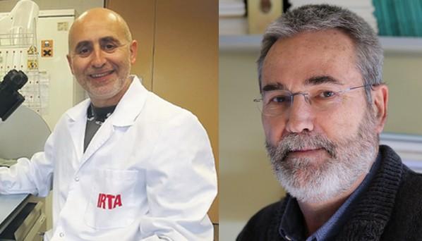 España - Joaquim Segalés y Josep Gasa ingresan a la Academia de Ciencias Veterinarias de Cataluña - Image 1