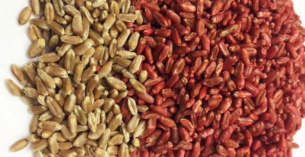 Argentina - Un tratamiento con Zinc y fosfitos para semillas de trigo - Image 3