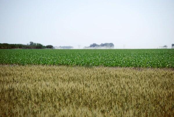 Argentina - Bioeconomía, una estrategia para reducir el estrés sobre el ambiente - Image 1