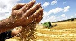 El cambio climático y las micotoxinas en los alimentos - Image 1