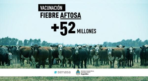 Más de 52 millones de bovinos vacunados contra la aftosa en la primera campaña 2021 - Image 1